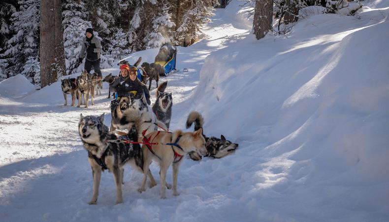 In skigebied Courchevel kun je ook hele mooie hondesledetochten maken. © Courchevel Tourisme / Pierre Thiaville